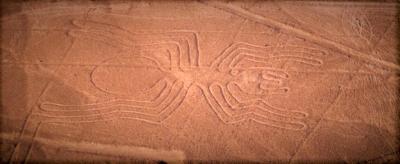 curly nomad peru nazca spider image