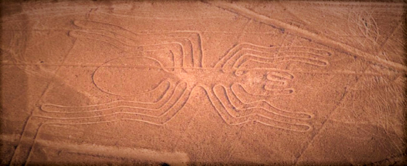 curly nomad peru nazca spider image