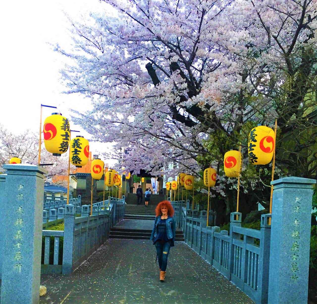 curly nomad japan 47 ronin sengakuji temple cherrytrees image