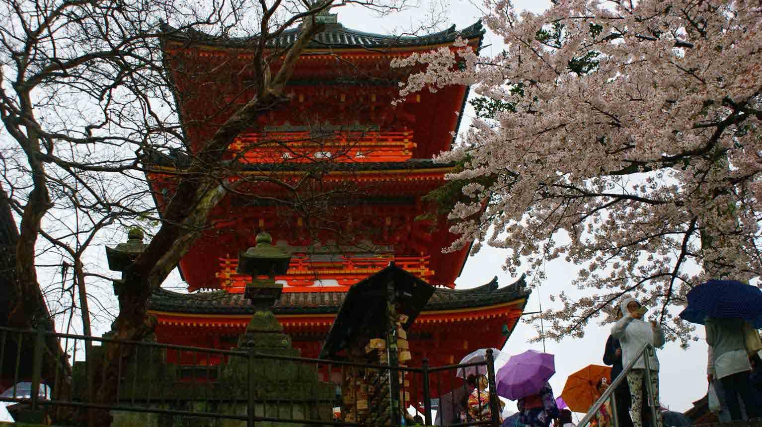 curly nomad asia japan temple pagoda hanami image