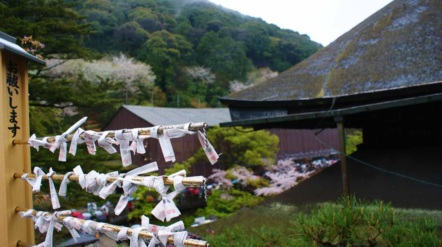 curly nomad asia japan temple sakura hanami cherry tree wishes image