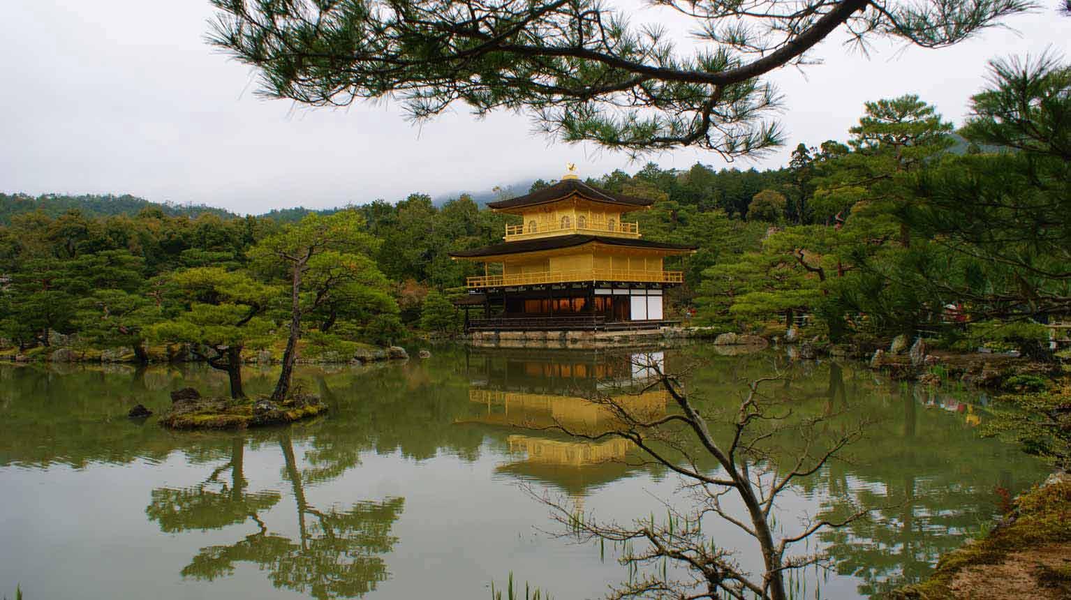 curly nomad asia japan golden temple sakura hanami cherry tree image