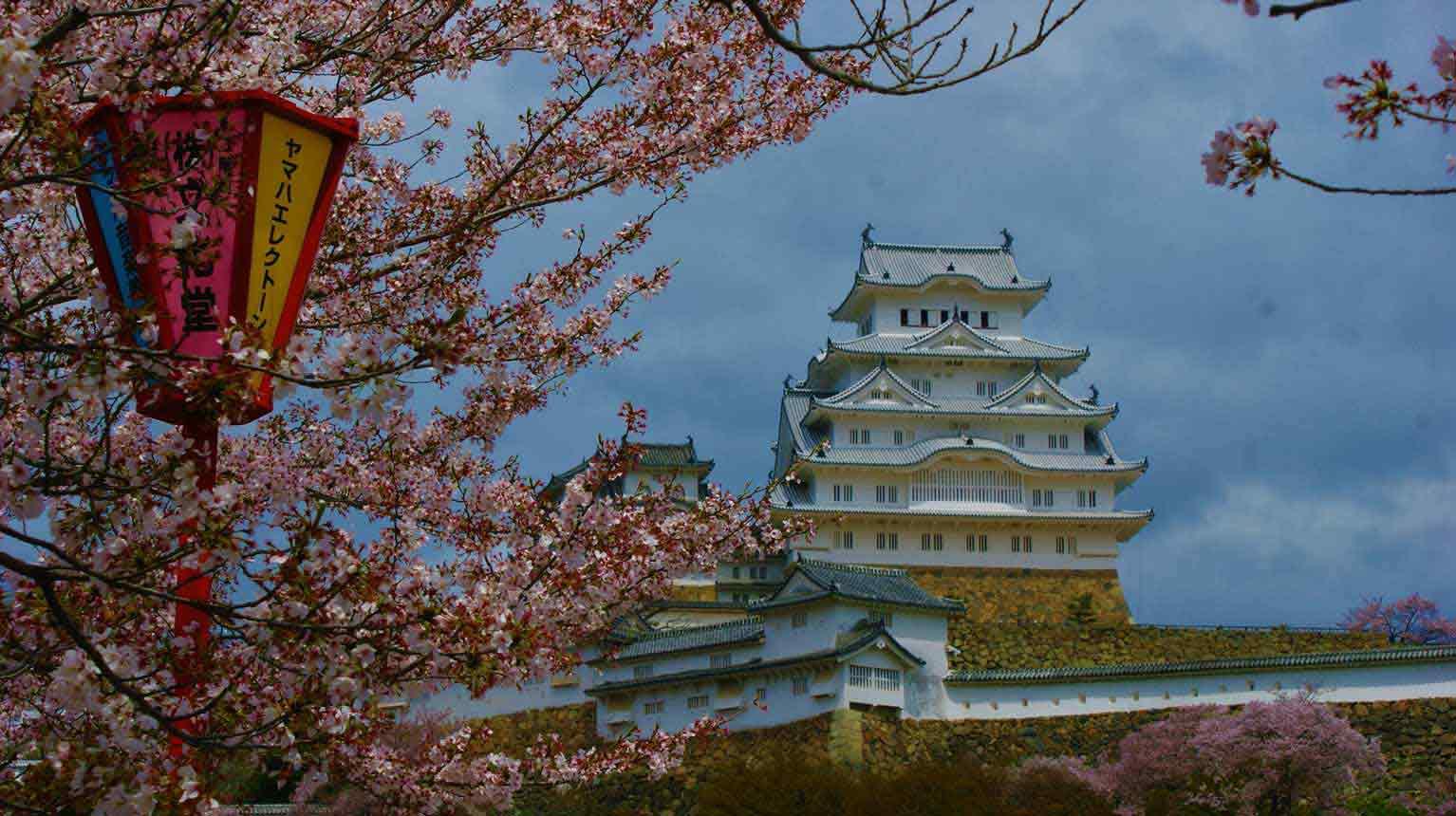 curly nomad asia japan white temple sakura hanami cherry tree photo