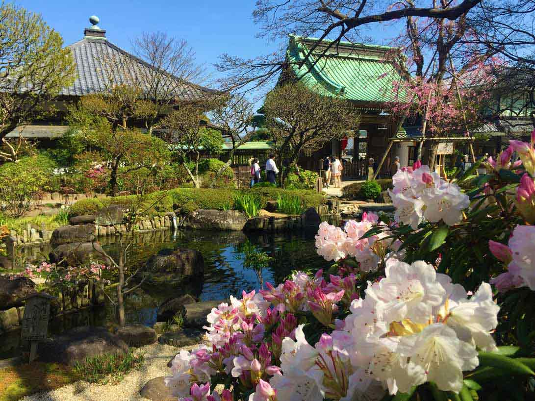 curly nomad asia japan green roof temple sakura hanami cherry tree photo