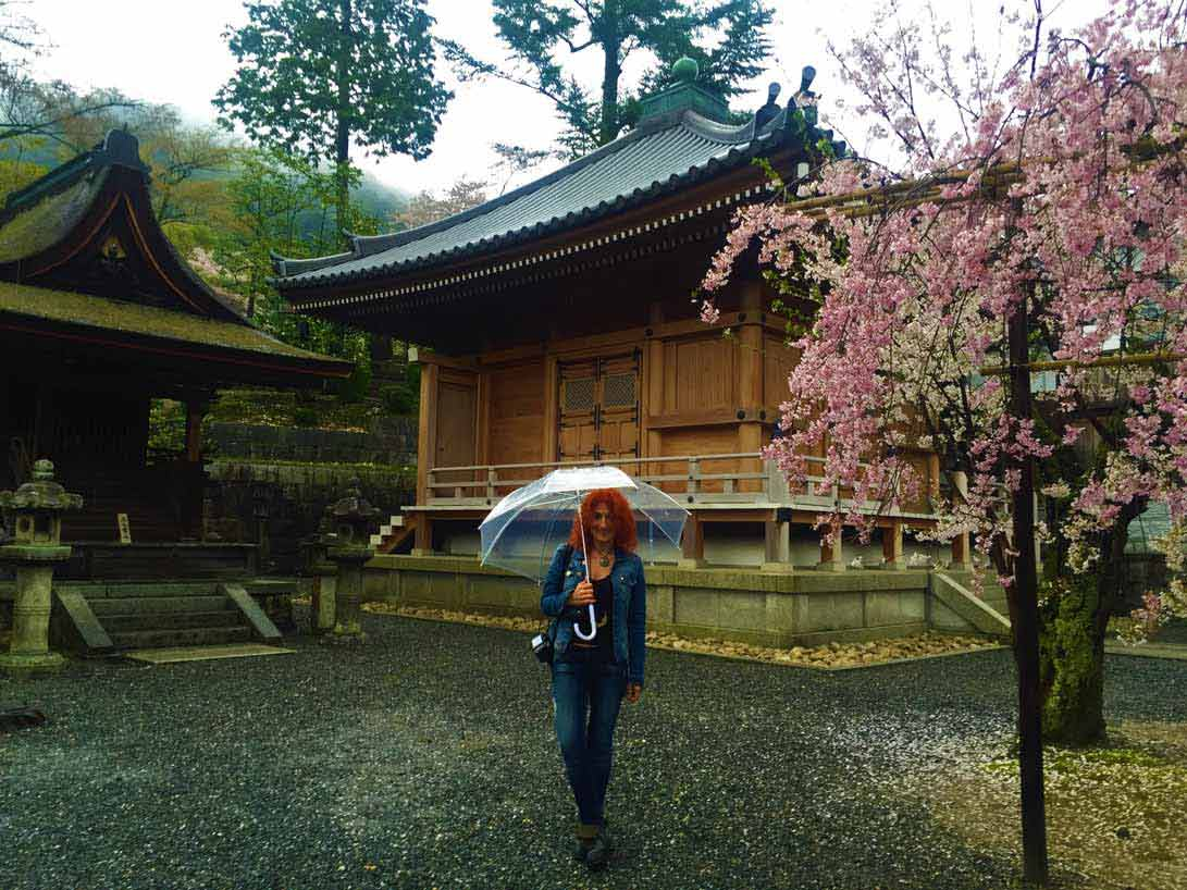 curly nomad asia japan pagoda temple sakura hanami cherry tree rainy day image