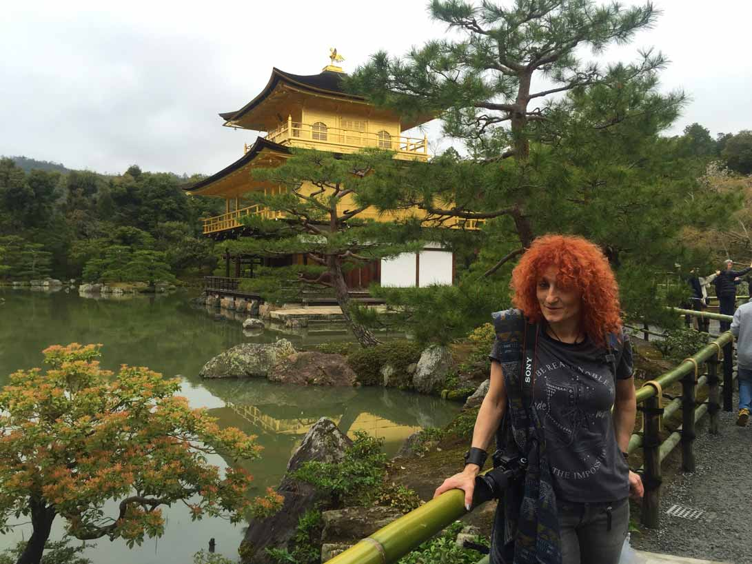 curly nomad asia japan pagoda golden temple sakura hanami cherry tree image
