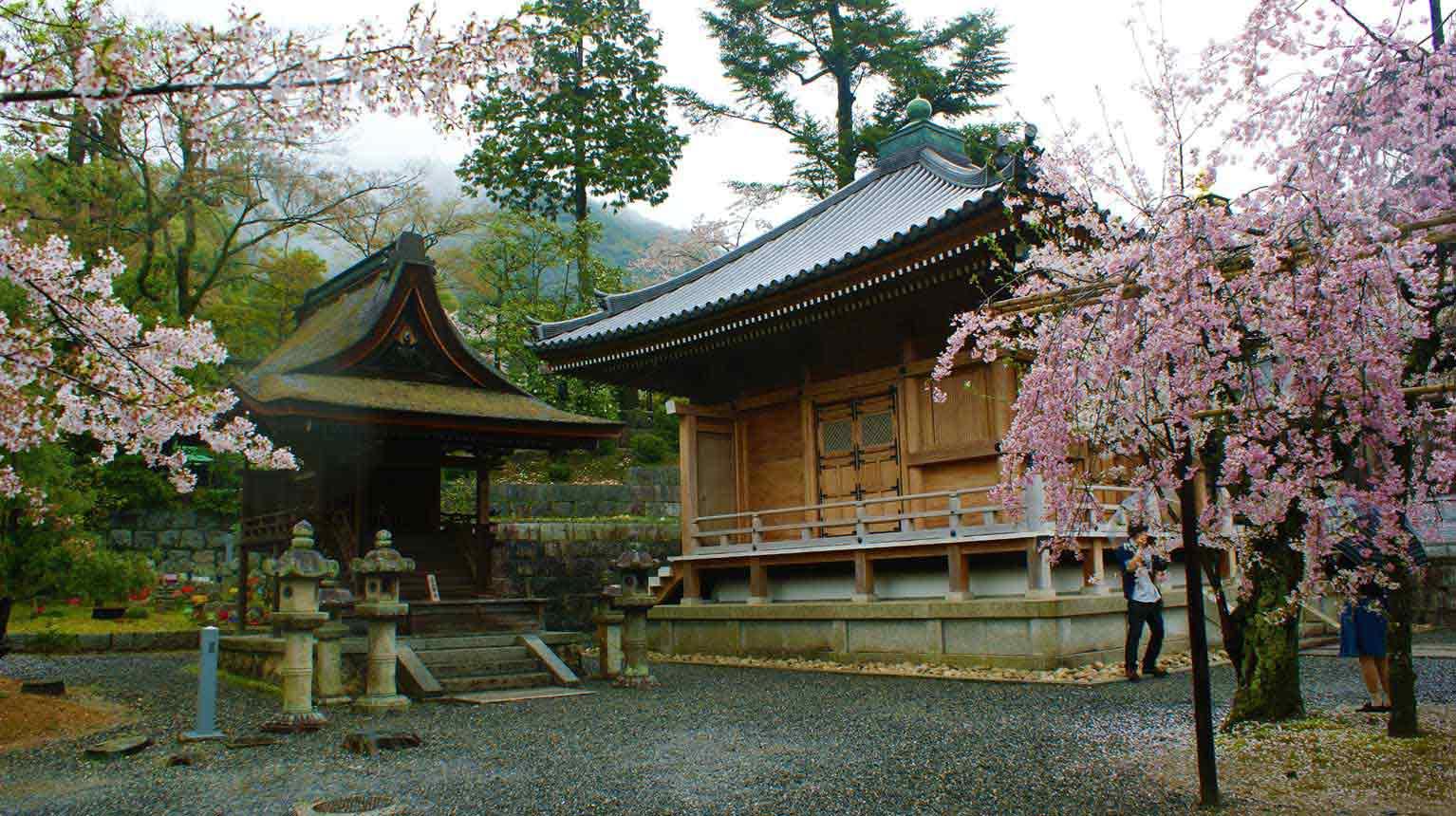curly nomad asia japan temple zen sakura image