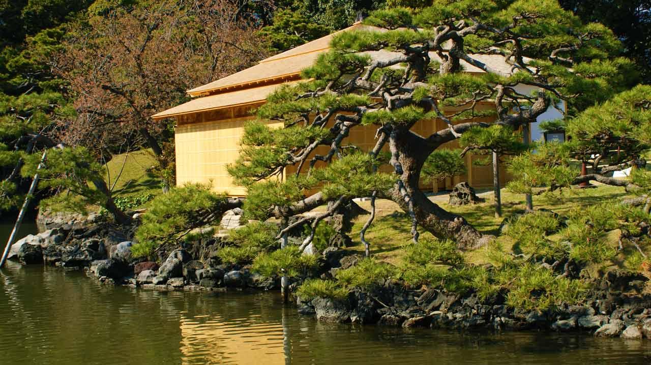 curly nomad asia japan pagoda bonsai tree lake image